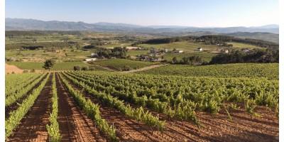 De ruta de vinos por el Bierzo